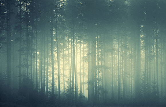 Foggy_forest_by_hogwarts_girls-d500mgs